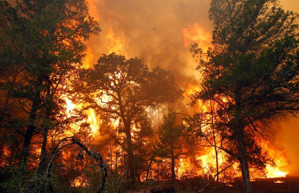 поза лотоса фото пожар в лесу каждом занятии